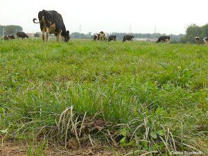 Il latte fa bene se l'animale sta bene: se è nutrito con erba e fieno, se ha sempre a disposizione della buona acqua pulita, se non è costretto in un lager...